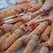 Shrimp at Italian Market