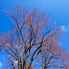 one day in Memphis... (Marcilia Bevitori) Tags: memphis usa tennessee trees trip ngc aoarlivre beautifulday spring bluesky sony marciliabevitori