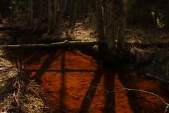 X-ing (J. Roseen) Tags: nature natur water vatten stream bäck träd trees log shadows skuggor eos7dmkii spring vår scandinavia skandinavien sverige sweden norden nordic
