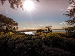 Trasimeno Lake (marcorighi1) Tags: lago umbria natura landscapes acqua olympus trasimeno
