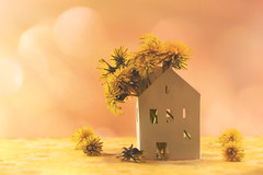 A Happy Home (charhedman - on and off) Tags: imadethislittlepaperhouseandsevenmore pickedthedandelionsfromthebackyardbeforetheygotmoweddownsavedtheirlivesabitlonger ahousefullofflowers welcomehome dandelions home house windows macro