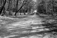 2017 - 04 - 03 - EOS 600D - The Old Warren - Former main route from Buckley to Broughton before the A55 was constructed - 001 (s wainwright) Tags: 2017 april theoldwarren buckley flintshire a55 canon600d eos600d