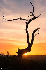 Last light (technodean2000) Tags: end day last light sunsunset sun sunset south wales uk tree colour nikon d610 lightroom