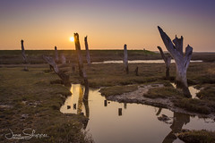 Ancient Wood (jammo s) Tags: thornham oldjetty sunset northnorfolk ancient pools lightroom canoneos6d canonef1740mmf4lusm