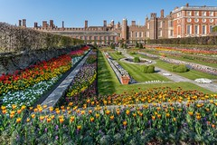 In bloom (James Waghorn) Tags: sigma1020f456 shadows spring palace fountain hamptoncourt garden flowers d7100 colourful bloom beauty england historic vibrant