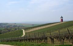 Rheinhessisches Hügelland, Weinberge  (Rhenish Hesse Hills, vineyards) (HEN-Magonza) Tags: rheinhessischeshügelland rhenishhessehills rhinehessehills rheinlandpfalz rhinelandpalatinate deutschland germany landschaft landscape weinberg vineyard