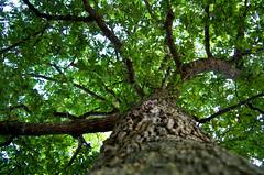 Foliage (Atreides59) Tags: arbre arbres trees tree nature up jersey channel island ile anglonormande anglo normande pentax k30 k 30 pentaxart atreides atreides59 cedriclafrance