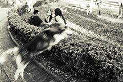 Praça da Liberdade (Johnny Photofucker) Tags: praçadaliberdade piazza plaza square black white preto branco cidade città city lightroom pb bw cachorro dog cane perro husky belohorizonte bh minasgerais mg 24105mm brazil brasile brasil cão pet animal animale