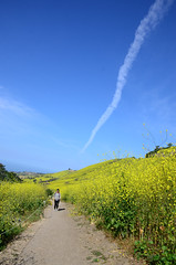 Jet Cloud (Zeetz Jones) Tags: superbloom wildflowers nature ranchopalosverdes portuguesebendreserve superbloom2017 rollinghills southerncalifornia