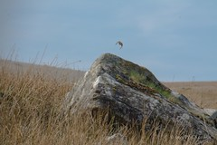 In flight (Justaboutdone74) Tags: angelpixcn blue clouds flowing green hike landscape mountains nationalpark nature nikond7100 river rocks sun vast wales walks libanus unitedkingdom gb