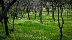 Green Floor (Tassos Giannouris) Tags: green trees nature athens greece grass landscape leaves forest
