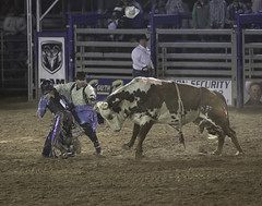 90246936943-87-Protecting the Cowboy at the Clark County Rodeo-1 (Jim There's things half in shadow and in light) Tags: 2017 april canon5dmarkiv clarkcounty logandale nevada rodeo fair cowboy rodeoclown bullriding bullfighter animal