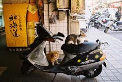 (YL.H) Tags: cat straycats street scooter taiwan taipei 台北 萬華 底片 貓 街貓