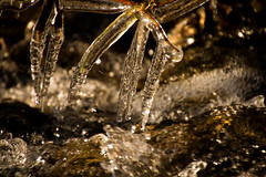 Last Ice (Alan McCollough) Tags: water ice spring