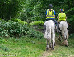 Riding In The Forest (M C Smith) Tags: horses riders eppingforest forest path ride trees green bushes grass hivi nettles brambles pentax k3