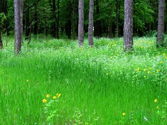 shades of spring (s_lverspring) Tags: forest foam green deep waves layers playground yellow wood grass bright straight tree contrast carpet shelter dense bliss