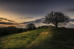 A golden April evening (Andy2305) Tags: blackhill malvernhills eveninglight goldenlight tree landscape