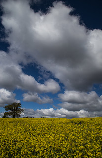 Lone tree, big sky.