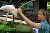 Taman Burung Bali Bird Park (rougetete) Tags: indonesia bali denpasar westnusatenggara islandparadise birthdaytrip milestonebirthdaytrip 50 50thbday tamanburung tamanburungbalibirdpark balibirdpark birdpark