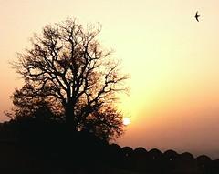 Serenity (SudeepMukherjee) Tags: sunset sun silhouette nature summer sky india fort jaipur tree rajasthan bird black color dream travel mobilephotography inspiration peace sunsetphotography