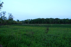 Field at Lincoln Marsh (danxoneil) Tags: nature marsh wheaton lincolnmarsh wheatonparkdistrict