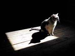 IMG_4145b (Monty Jahn) Tags: light cat licht katze miez