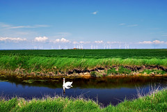 Broomhill Levels (richwat2011) Tags: reflection landscape swan nikon day view ditch farmland clear fields d200 dyke scape eastsussex camber windturbines romneymarsh wetreflection 18200mmvr wallandmarsh littlecheynecourtwindfarm broomhilllevels