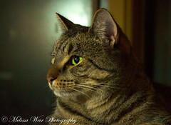 Green Eyes (melissaweir) Tags: pet green cat canon fur whiskers furball