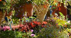 DSC_1280a (Fransois) Tags: morning flowers fleurs montral market jeantalon march matin jardinires