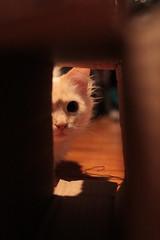 just looking (deadoll) Tags: cats cute love cat fur 50mm furry kat feline chat amor adorable kitty kittens 50mm14 7d gata felinos felino felines neko katze fofo gatto babys catoftheday gatti pur crazycatlady 50mmf14 gatas canon50mm mustlovecats canon7d