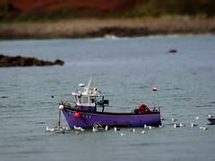 Effet miniature (yannlebulot) Tags: sea brittany bretagne 29 finistère argenton
