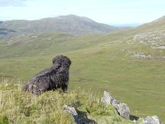 Dougal a' coimhead air Sgurr na Coinnich (Màrtainn) Tags: dog chien cão cane scotland highlands isleofskye alba hond escocia panasonic perro hund pies kutya labradoodle alban szkocja hundur suns pes escócia dougal schottland schotland ecosse anjing scozia kopek skottland собака koira skotlanti skotland koer broskos šuo câine escòcia anteileansgitheanach skócia albain iskoçya cù шотландия σκωτία sgurrnacoinnich σκύλοσ gàidhealtachd eileansgitheanach beinndubhabhealaich scoţia fz48 dmcfz48 panasonicfz48 panasonicdmcfz48