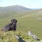 Dougal a' coimhead air Sgurr na Coinnich thumbnail