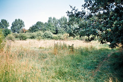 ot35 - wyken slough (johnnytakespictures) Tags: summer lake film nature sunshine natural olympus naturereserve analogue coventry agfa slough trip35 wyken colorplus200