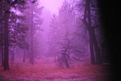 fog (zolophoto) Tags: trees fog forest purple mystic