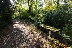 Overgrowth (David Allen's Photostream) Tags: autumn trees leaves gardens bench landscape chair nikon path secret perspective wideangle stowe buckingham bushes 1635 d600