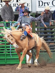 "Baker County Tourism – basecampbaker.com 10395 (Baker County Tourism) Tags: ranch heritage history cowboys museum oregon festivals fair bulls historic rodeo agriculture 4h broncs basecampbaker ""bakercounty"" ""easternoregon"" ""bakercountyfair"" ""halfway"" ""bakercountytourism"" ""basecampbaker"" ""bullriding"" ""hellscanyonscenicbyway"" ""broncriding"" ""idahocowboyassociation"" ""icarodeo"" ""williamsandfordrodeo"""