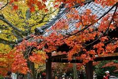 Shinnyo-do (JuhaOnTheRoad) Tags: shinnyodo japan kyoto temple buddhism autumn autumnleaves earthasia