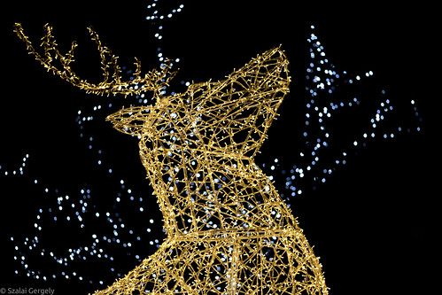 Reindeer of light