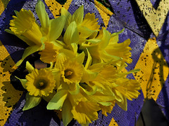 February Bouquet (BKHagar *Kim*) Tags: flowers flower green yellow gold purple buttercup daffodil bloom bouquet blooms daffodils buttercups bkhagar