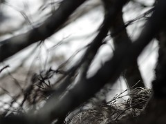 :: Unravel :: (J!bz) Tags: winter light shadow bw mars naturaleza blur france alps cold tree blanco luz nature monochrome grass composition forest alpes dark arbol grey gris march noir natural bokeh hiver negro sombra monochromatic nb ombre sombre bosque lumiere invierno monochrom francia foret arbre blanc marzo froid frio rama flou herbe obscur branche oscuro hierba jbz romanche jibz
