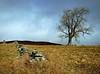 The Shepherding Tree (kenny barker) Tags: landscape scotland day cloudy perthshire explore landscapeuk olympusep1 panasonic20mmf17asphlens
