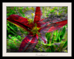 Imitation painting. Experiment. (tarelkaz1) Tags: flowers red macro green texture garden crazy memories experiment daylily topshots flowersarebeautiful excellentsflowers sonydscs730 theoriginalgoldseal mygearandme ipiccy
