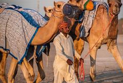 Deserts and Camels 131107 17_19_38 (Renzo Ottaviano) Tags: race al dubai desert united racing course emirates camel arab lorenzo races camels corrida emirate deserts uniti renzo unis arabi carrera corsa emirati unidos camellos chameaux rabes kamelrennen   arabes ottaviano camelos emiratos emirados vereinigte arabische cammelli emiratiarabiuniti mirats     marmoun