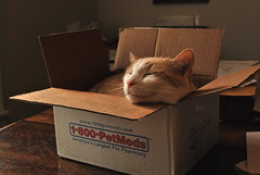 floating head Otis (rootcrop54) Tags: light cats sunshine cat funny otis box head goofball cc3000
