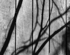 14SHDP010-583 - 2nd Wedding Anniversary - Leuralla (gdaymateowyagoin) Tags: world park new blue white black mountains heritage wales waterfall blackheath south lookout caves national nsw cascade leap katoomba leura jenolan govetts leuralla