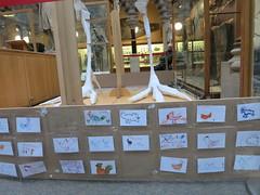 chicken cards (cleanskies) Tags: ounhm oxfordnaturalhistorymuseum museum tyrannosaur chicken giantchicken skeleton