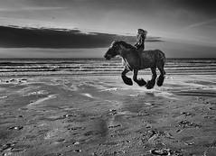 - free - (antonkimpfbeck) Tags: beach horse flyinghorse reitsport bnw bw blackandwhite monochrome fineart fuji xe2