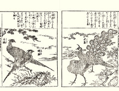 Tree peony, silver pheasant, golden pheasant and green peafowl (Japanese Flower and Bird Art) Tags: flower tree peony paeonia suffruticosa paeoniaceae silver pheasant lophura nycthemera phasianidae golden chrysolophus pictus green peafowl pavo muticus shusui shimokobe kano woodblock picture book japan japanese art readercollection
