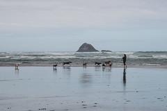 Patron Saint of Dogs on the Beach (jon_spalding) Tags: blacksandbeach newzealand dogwalker dogs surf